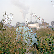 Man collects mustard leaves in a field accross an oil refinery along the Ganges