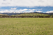 Farmland outside Masterton looking towards the Tararua range