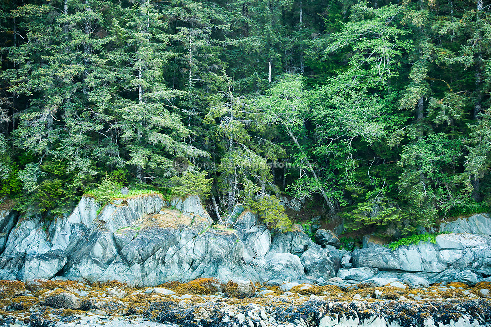 Rugged coastline of rocks and trees near Juneau, Alaska.