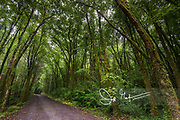Forest along the Pigeon Hole loop walk in Cong, County Mayo, Ireland.