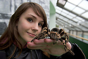 """Laura McGennis 1st year Science, at the """"undergrad"""" Science Fair in NUIG with a Tarantula . Photo:Andrew Downes"""