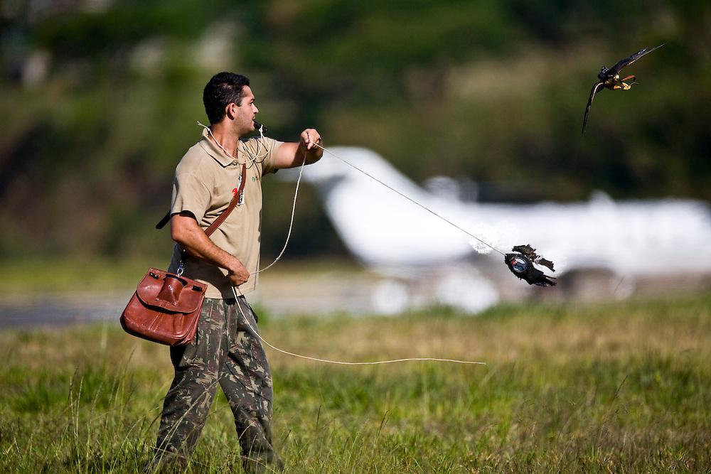 Belo Horizonte_MG, Brasil...SOS Falconinformes. Falcoaria no Aeroporto Tancredo Neves para a prevencao de acidentes aereos. Na foto, Gaviao-de-Penacho (Spizaetus Ornatus)...SOS Falconinformes. The falconry in the Trancredo Neves airport for the prevention of air accidents. In this photo, the Ornate Hawk-eagle (Spizaetus Ornatus)...Foto: JOAO MARCOS ROSA / NITRO