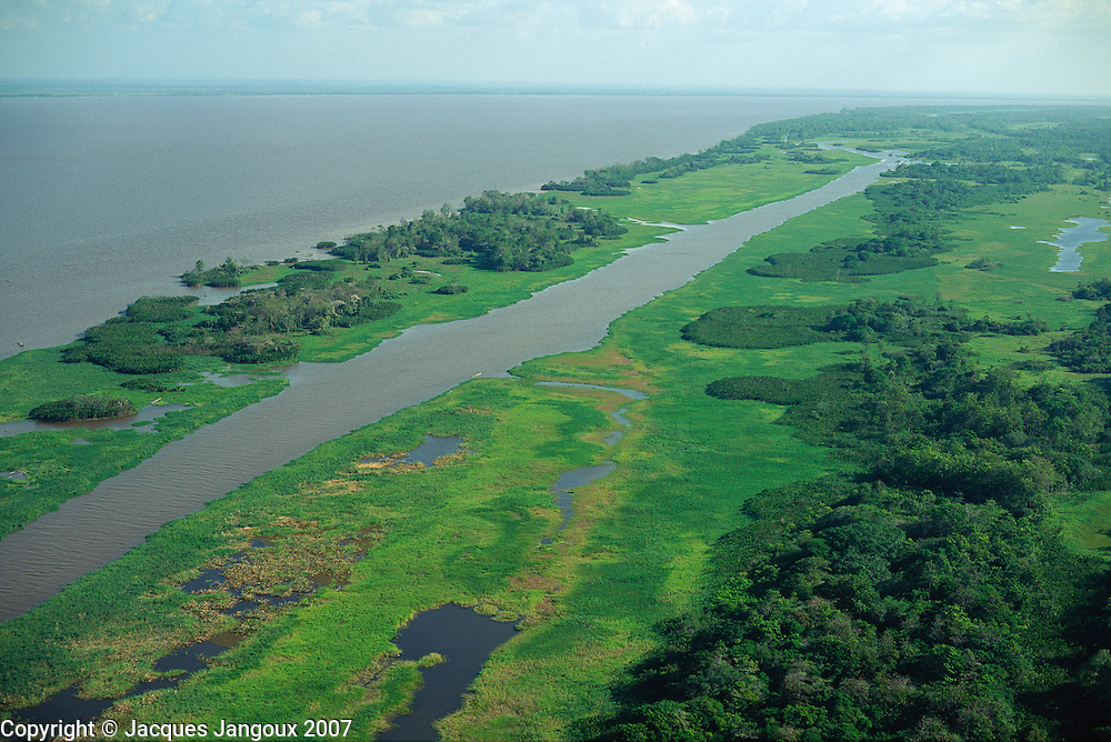Aerial view of lower Amazon floodplain with uncovered grasslands at low water level during dry season, Brazil, Para.