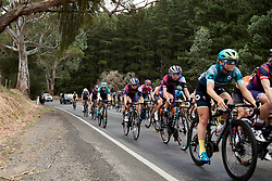 Jessica Pratt (AUS) in the bunch on Stage 1 of 2020 Santos Women's Tour Down Under, a 116.3 km road race from Hahndorf to Macclesfield, Australia on January 16, 2020. Photo by Sean Robinson/velofocus.com