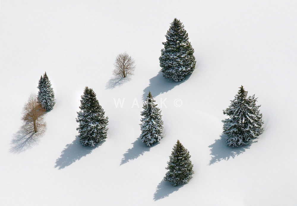 Fresh snow and alpine trees in Gunnison County, Colorado