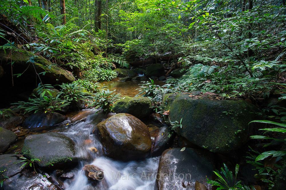 Stream flowing through lush tropical rainforest, Kubah National Park, Sarawak, Malaysia