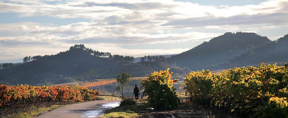 Azofra. Viñedos. LA Rioja ©Daniel Acevedo / PILAR REVILLA