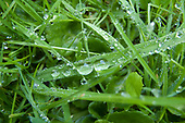 Raindrops grass