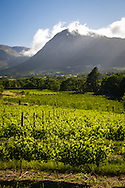 Vineyards in the Franschhoek Valley, South Africa. http://www.gettyimages.com/detail/photo/vineyards-franschhoek-south-africa-royalty-free-image/97936157