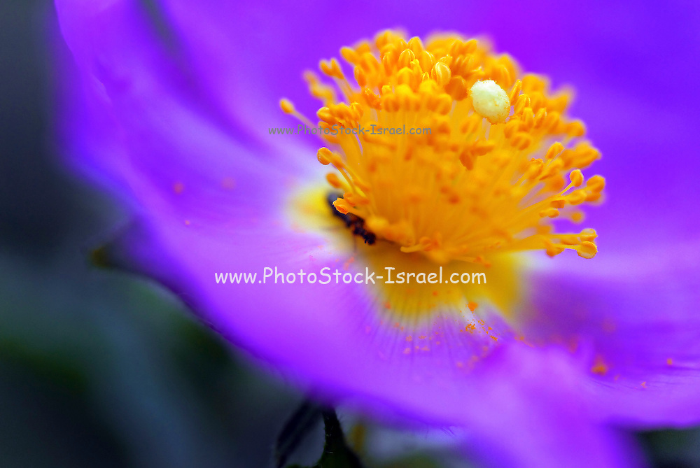 Yellow and Purple abstract flower