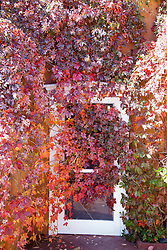 overgrown vines over a door