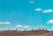 Spanje, Consuegra, 28-5-2007Los Molinos, de molentjes, omgeving Valdepenas, La Mancha, don quichote, molens, windmolens.Windmolens, Los Molinos, tussen Valdepenas en Toledo in Castilla La Mancha die een rol spelen in het boek van Cervantes, Don Quichote, quichot. Spaanse literatuur, Roman.Foto: Flip Franssen/Hollandse Hoogte