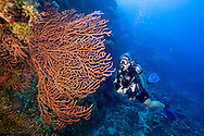 A girl scuba diving on the reef wall around Roatan, Honduras.