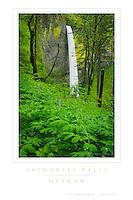 Latourell Falls Oregon Poster