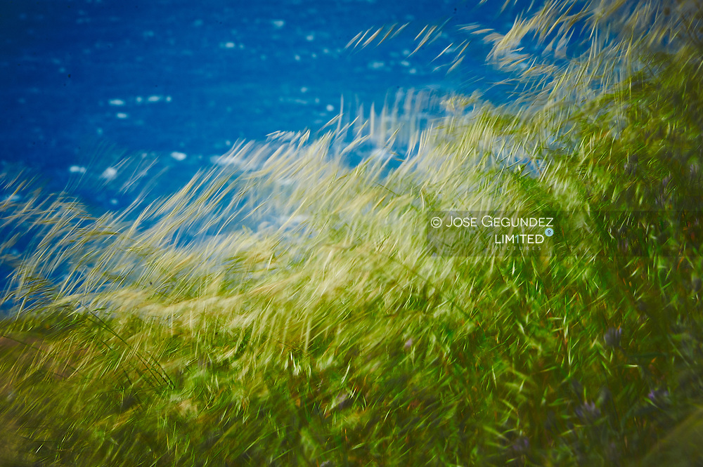 Close up of blades of grass over the ocean