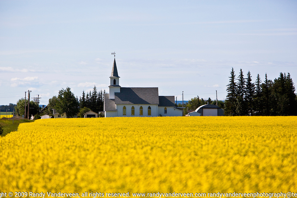 Photo Randy Vanderveen.LaGlace, Alberta.The bright yellow canola blooms surrounding the LaGlace church appear to be the answer to prayer as the rain fall over the past two weeks in the Peace Country should still benefit both oil seed and grain crops which are a little behind this year.