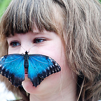 London, UK - 25 March 2013: A child comes face to face with species from all over the globe including the spectacular swallowtail, the beautiful blue morpho, the magnificent moon moth and many more, originating from Africa, Southeast Asia and North and South America.