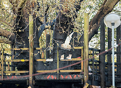 © Licensed to London News Pictures; 11/04/2020; Bristol, UK. A charred tree timbers are seen as Avon Fire and Rescue Service and police attend a fire at the St Pauls Adventure Playground on the Saturday evening of the Easter weekend during the coronavirus lockdown. The fire damaged the wooden climbing frame and blackened the tree in the playground which is closed due to the coronavirus pandemic. The cause is not yet known. Photo credit: Simon Chapman/LNP.