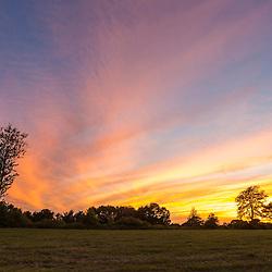 Trees at dusk on Sagamore Hill in Hamilton, Massachusetts.