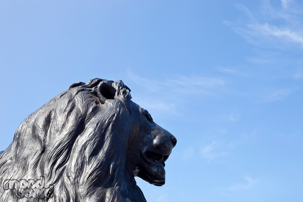 Lion Statue and Nelson's column in Trafalgar Square, London