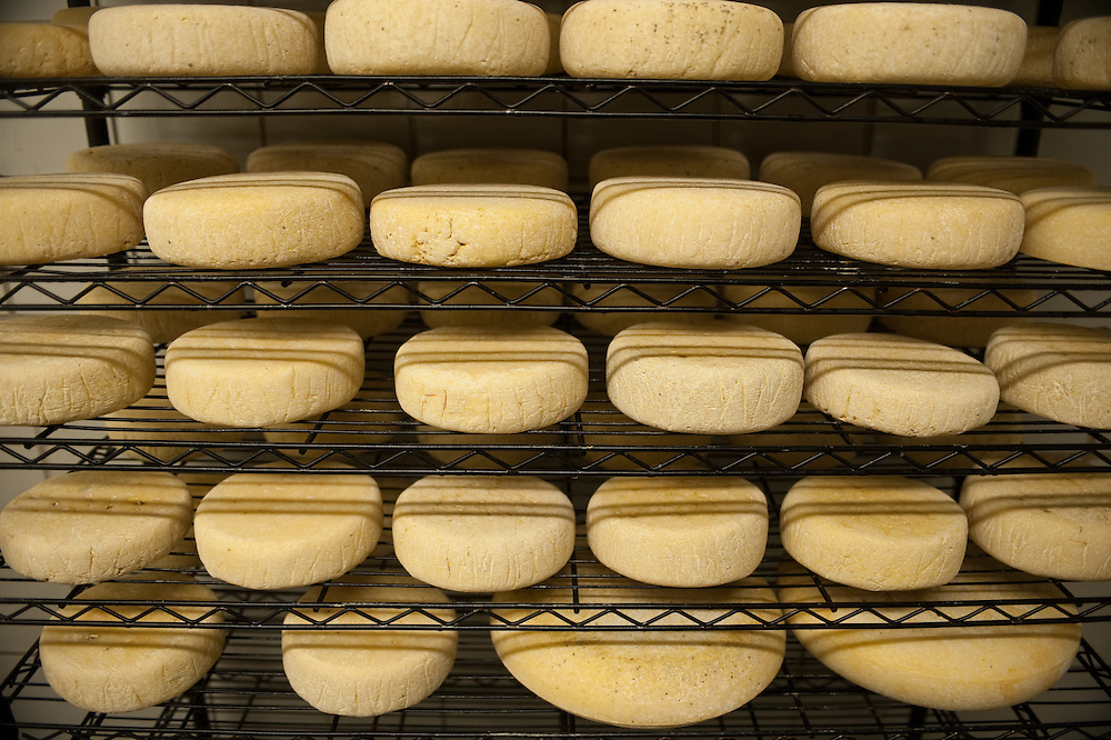 Racks of cheese in cheese making process