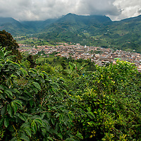 March, 21, 2014 - Coffee plants grow on the hillsides surrounding the town of Jardin in the Department Antioquia region of Colombia.<br /> Story Summary:<br /> Deep in the verdant valleys of Colombia&rsquo;s Department Antioquia region is Fabio Alonso Reyes Cano&rsquo;s coffee finca. Finca La Siemeona has been in Cano&rsquo;s family for generations. <br /> He and two workers farm the 5-acres of land as his ancestors did, bean by bean.  It is a tradition that has dwindled amid modern day farming techniques that harvest quicker but the selectively picked ripe deep red cherries are picked individually by hand for the best quality. &lsquo;Grain by grain&rsquo; processing allows for greater control over that quality of one of Colombia&rsquo;s top exports.  It also may help save an industry that is seeing firsthand the effects of climate change.<br /> Cano takes pride in the organic process, which he practices out of respect for nature and the land he was born and raised on.  A businessman, Cano keeps his eyes on way to grow but he also takes seriously his role as steward, encouraging biodiversity and employing natural pest control on the finca.  His practices are at odds with other coffee farmers, who have adopted more industrialized techniques. <br /> Climate change threatens a way of life that supports about 92,000 families nationwide and serves as one of Colombia&rsquo;s economic backbones.  Colombian coffee production has declined in recent years due to regional climate change associated with global warming as both the average temperatures have risen and an increase in rainfall.  The trend disrupts the specific climate requirements to grow the Coffea Arabica bean, and a way of life. (Credit Image: &copy; Eric Reed/ZUMAPRESS.com)