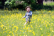 © Licensed to London News Pictures. 07/06/2015. Morden, UK Four year old Charlie Watson runs through a meadow of Buttercups in the sunshine at Morden Hall Park in South West London today 7th June 2015. Photo credit : Stephen Simpson/LNP