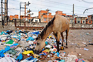 Lost horse in a crack spot in Jacarézinho favela area, North Zone of Rio de Janeiro. Military police and social workers of the City looking for crack users in the early morning to take them to a selection center. Minors will be directed to detention rehab centers.// Un cheval paumé dans le coin du crack, Favela Jacarézinho, Zona Norte de Rio. La police militaire et les assistants sociaux de la Mairie recherchent les usagers de crack au petit matin, pour les emmener dans un centre de tri. Les mineurs seront dirigés vers des centres fermés.