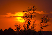 Orange Sky Paints Silhouette of trees in setting sun scape