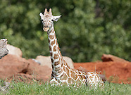 OKC Zoo - 8/11/2012