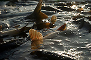 Carp breeding in Poland photo Piotr Gesicki