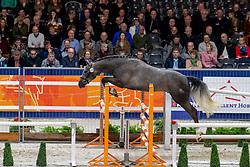 140, Maestro<br /> KWPN hengstenkeuring - 's Hertogenbosch 2020<br /> © Hippo Foto - Dirk Caremans<br />  30/01/2020