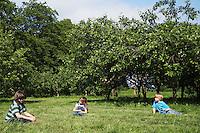 Three children (4-6) sitting on grass near orchard