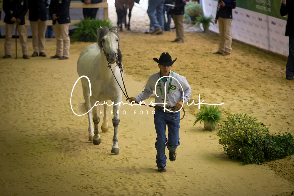 Paulo Koury Neto, (BRA), Dont Whiz WRB - Horse Inspection Reining  - Alltech FEI World Equestrian Games™ 2014 - Normandy, France.<br /> © Hippo Foto Team - Dirk Caremans<br /> 25/06/14