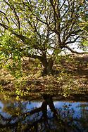 Europa, Niederlande, Zeeland, Eiche im Naturpark Oranjezon bei Vrouwenpolder auf Walcheren, ehemaliges Trinkwassergewinnungsgebiet.<br /> <br /> Europe, Netherlands, Zeeland, oak tree in the nature park Oranjezon near Vrouwenpolder on the peninsula Walcheren, former drinking water abstraction area.