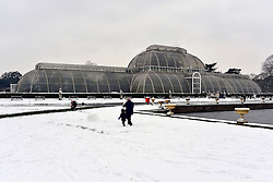© Licensed to London News Pictures. 19/01/2013. Kew, UKPeople play in the snow near the garden's famous glass houses. People enjoy the snow at Kew Gardens in West London today 19th January 2013. More cold weather and snow are expected over the coming days.  Photo credit : Stephen Simpson/LNP
