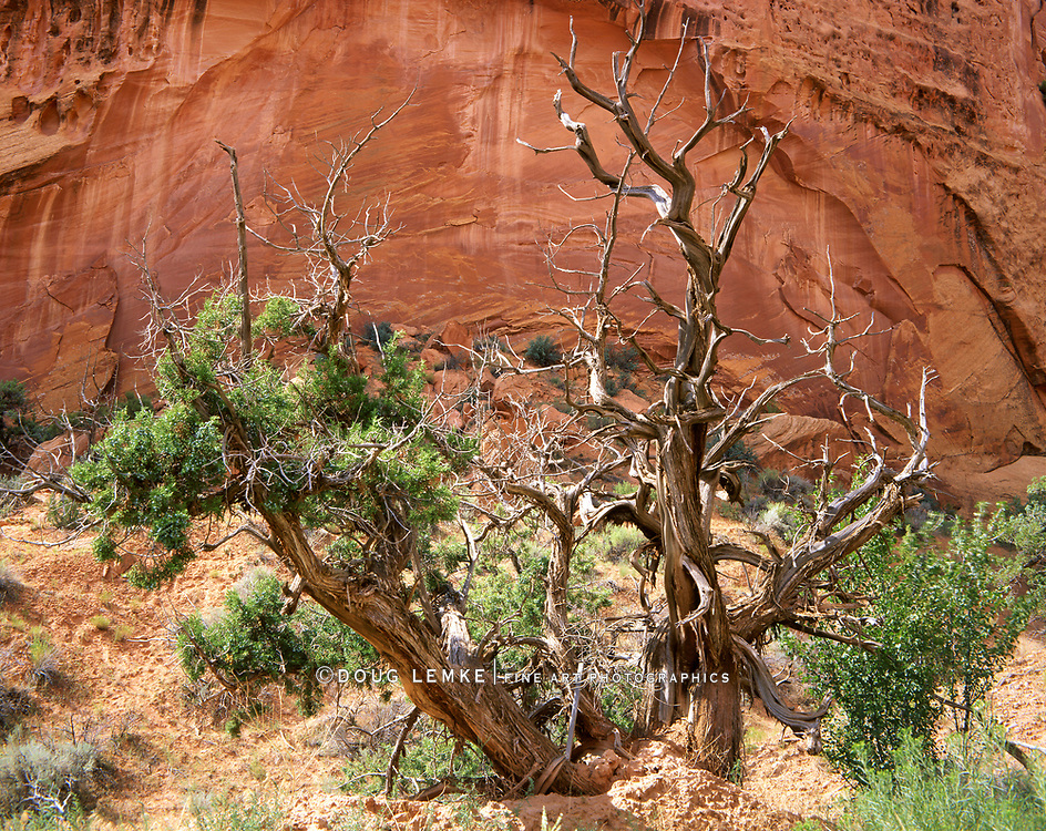 Dead Tree And Rock Wall, Grand Staircase Escalante National Monument, Utah