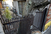 residential house with a tree grown into the entree gate Japan Yokosuka