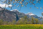 Frühlingsbild von Niederbauenchulm und Oberbauenstock mit Löwenzahnen im Vorgrund