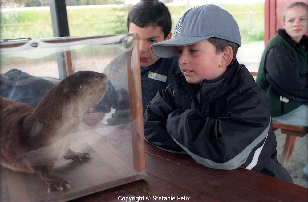 Elementary students on a field trip view taxidermy animal from the habitat