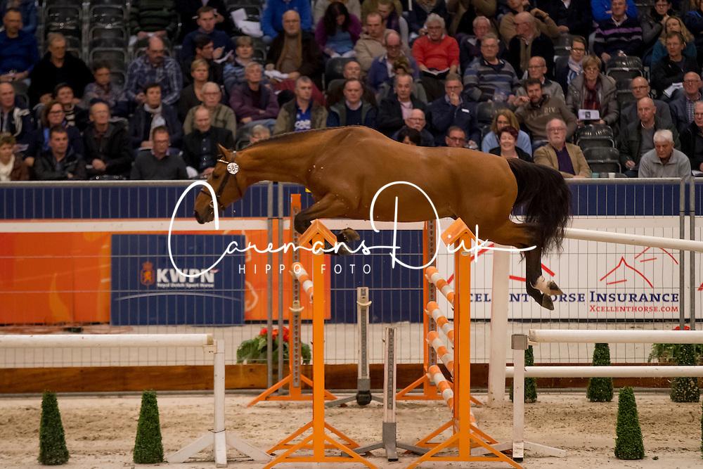585 - Jamal EB<br /> KWPN Hengstenkeuring 2017<br /> © Dirk Caremans<br /> 01/02/2017