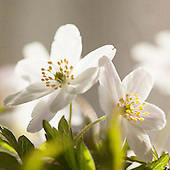 Flora - Flowers - Plants