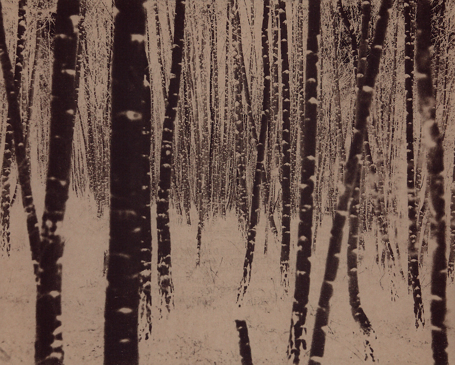 Image converted to a negative form and created by using an alternative photographic process called cyanotype.