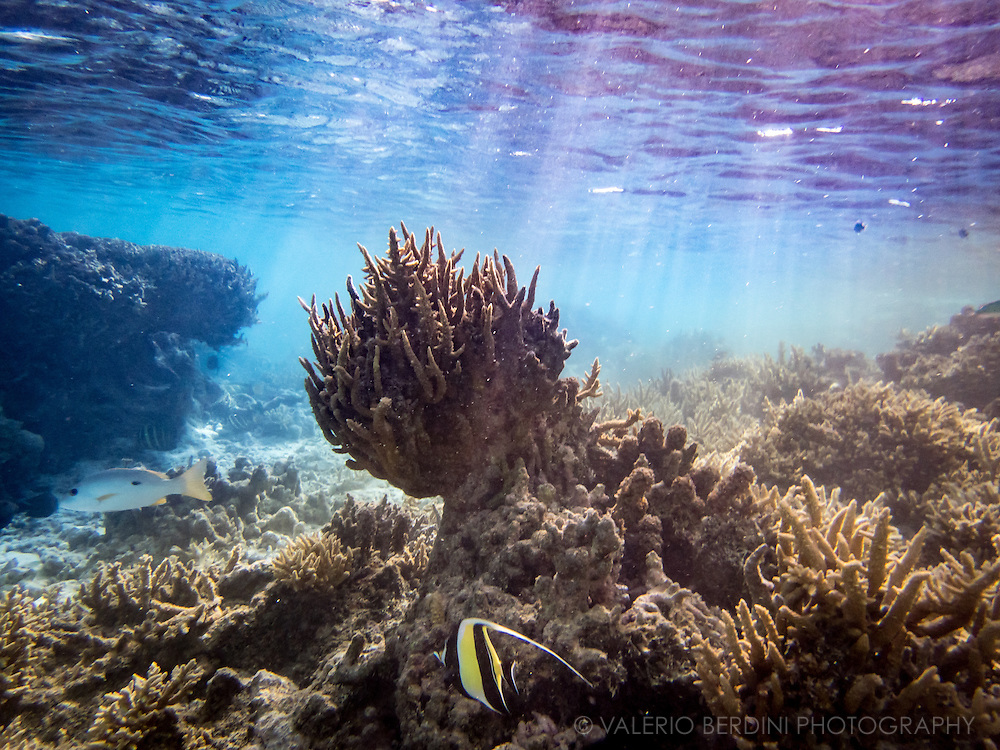 Scene from a reef, tropical fishes swim in hundreds in the rich tropical waters of Polynesian archipelago.