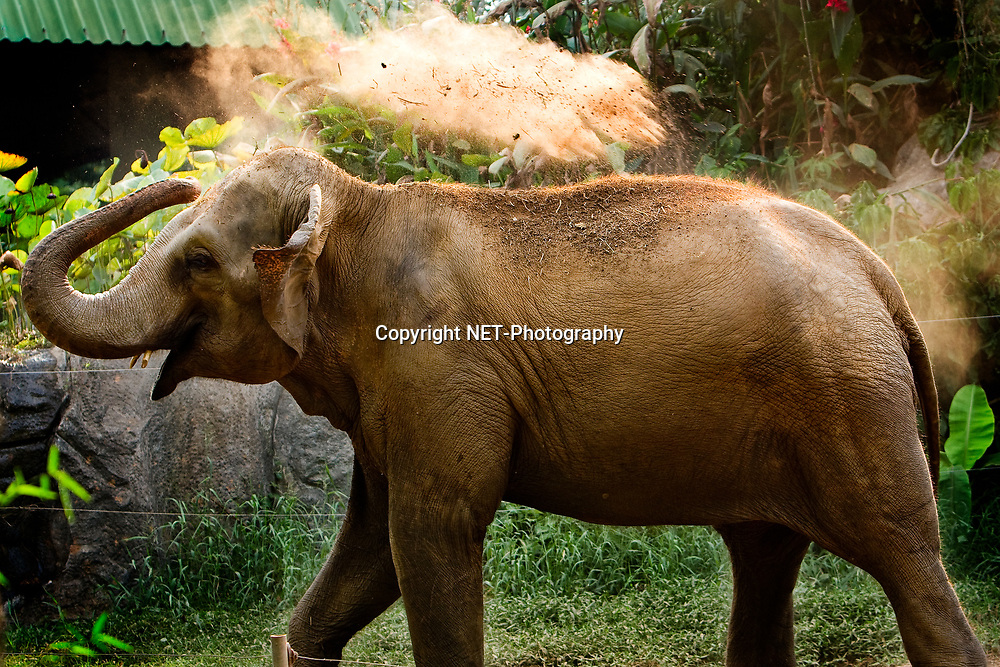 Animal in Dusit Zoo, Bangkok, Thailand