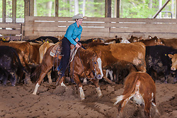 May 20, 2017 - Minshall Farm Cutting 3, held at Minshall Farms, Hillsburgh Ontario. The event was put on by the Ontario Cutting Horse Association. Riding in the 1,000 Amateur Class is Lisa Hall on Quixote Lena Pepto owned by the rider.