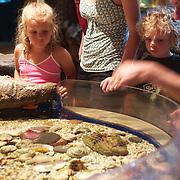 A family observe sea creatures at Touch the Sea Aquarium, Aranui road. Mapua. New Zealand, 2nd February 2011, Photo Tim Clayton.