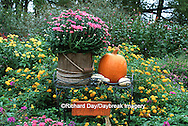63821-12002  Fall Garden display:  Mums in wooden bucket, pumpkins, gourds, lantana & welcome fall sign  Marion Co. IL