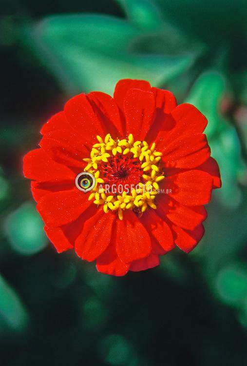 Flor./ Flower.Foto © Marcos Corazza/Argosfoto