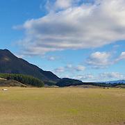 Himiona/Putauaki Trust Farms